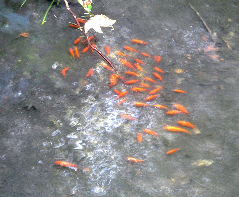 Fish-Ferndell 124