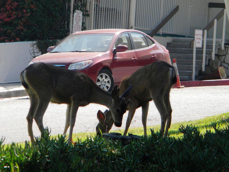 Deer-AFI 072uw