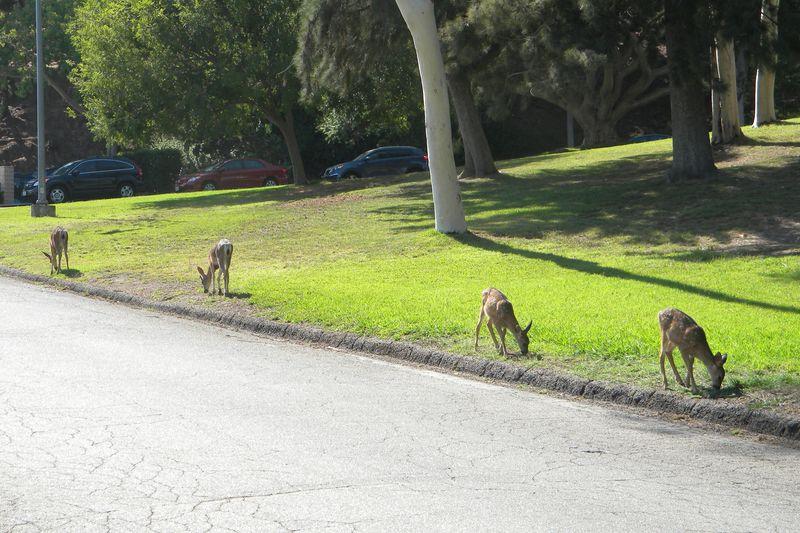 Deer-AFI-079uw