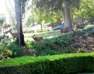 Deer-AFI 066uw