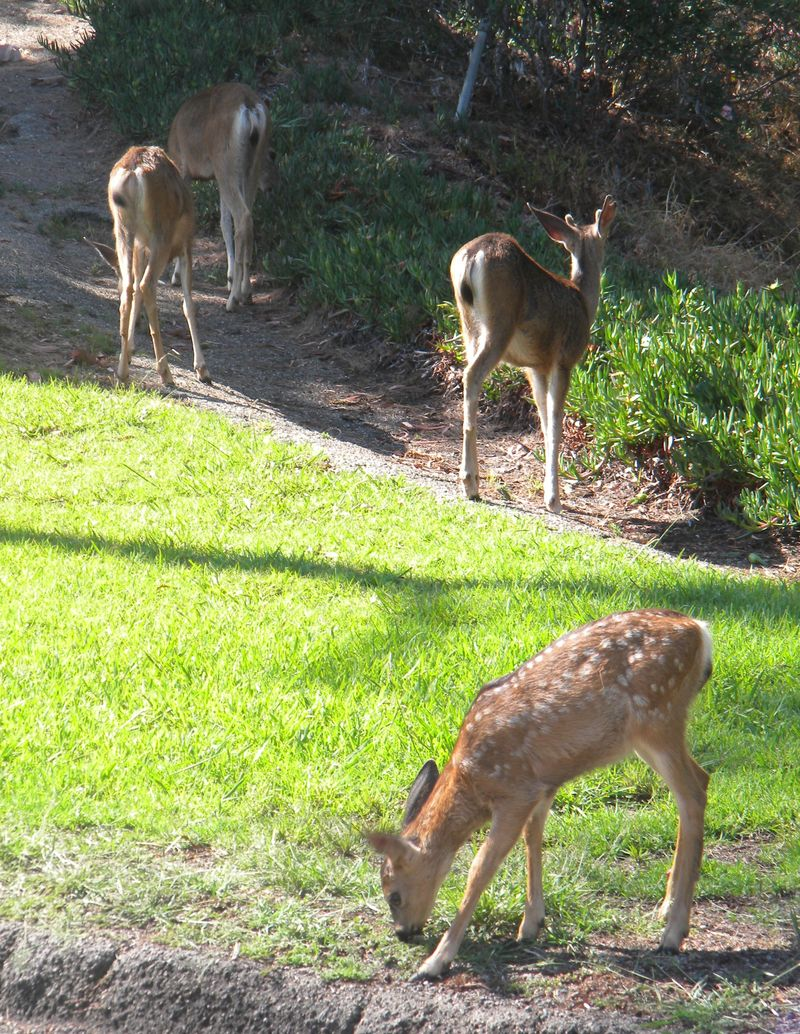 Deer-AFI 048uw