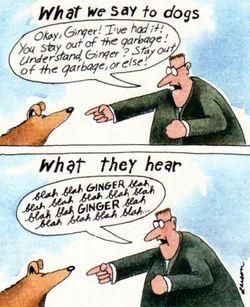 Larson_what_dogs_hear