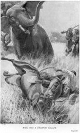 Rogue_elephant_4